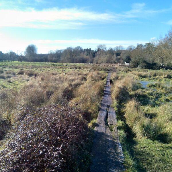 Shawford - Twyford Down photo 2