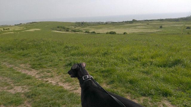 Dog walk at Sheepcote Valley