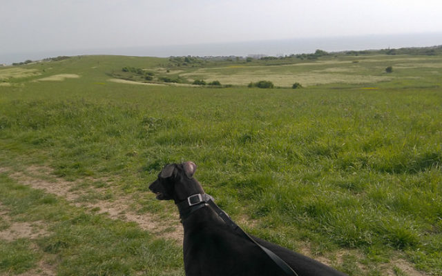 Sheepcote Valley Dog walk in Sussex (East)