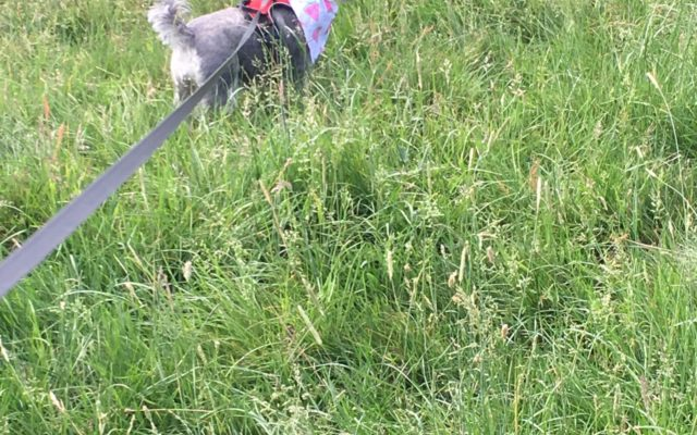 Shepherd Meadows Dog walk in Berkshire