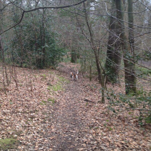 Sherrardspark Wood photo 1