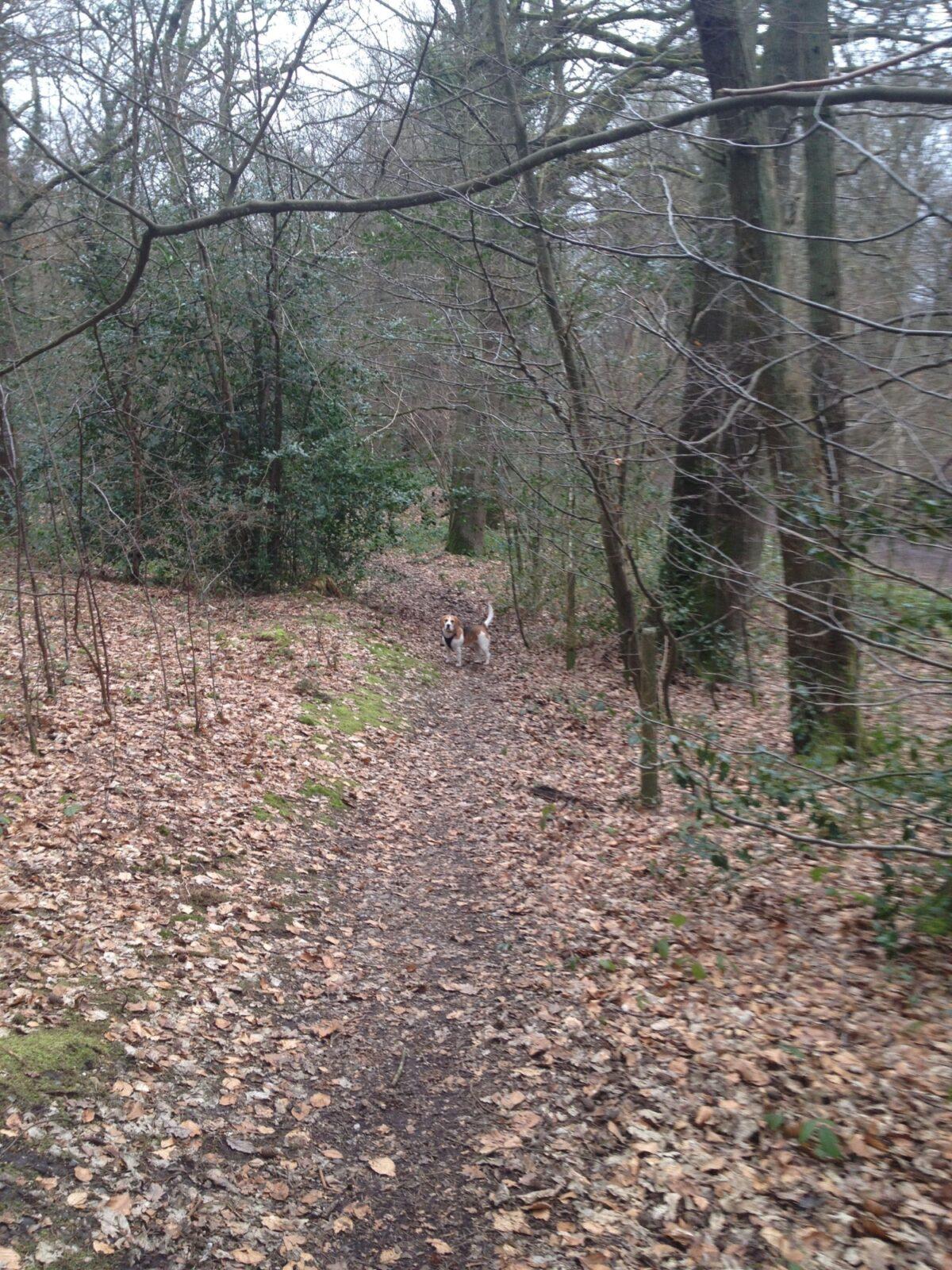 Sherrardspark Wood large photo 1