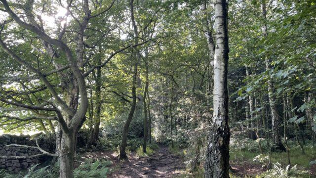 Dog walk at Shining Cliff Woods