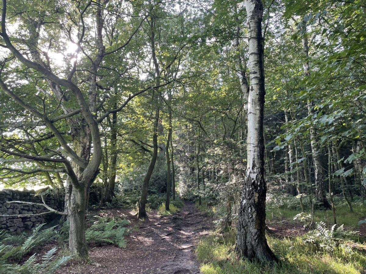 Shining Cliff Woods large photo 1