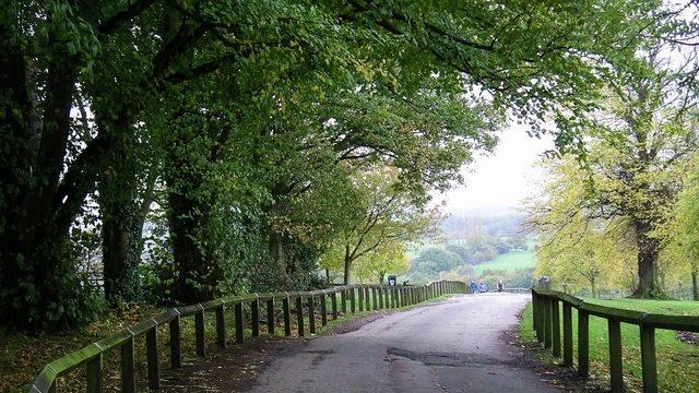 Dog walk at Shipley Country Park
