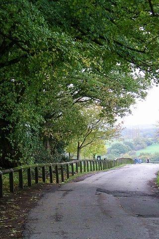 Dog walk at Shipley Country Park photo
