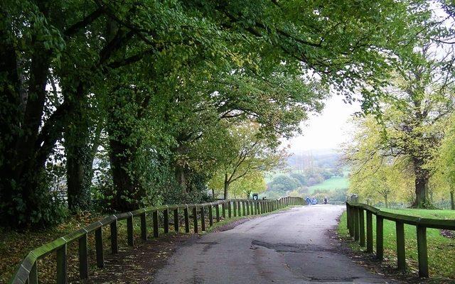 Shipley Country Park Dog walk in Derbyshire