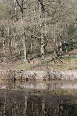 Dog walk at Shipley Glen, Shipley photo
