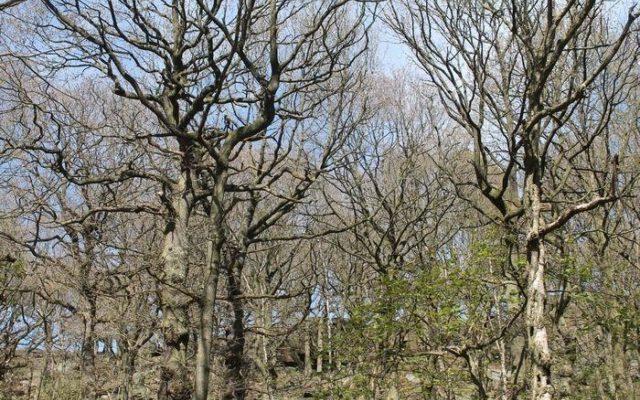 Shipley Glen, Shipley Dog walk in Yorkshire (West)