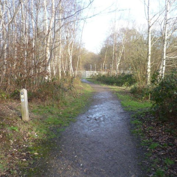 Shorne Woods Country Park photo 3