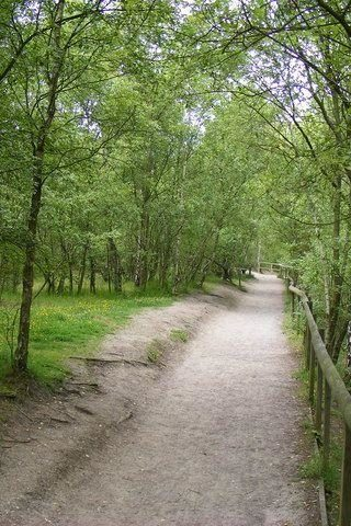 Dog walk at Shorne Woods Country Park photo