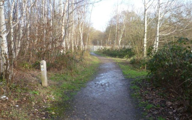 Shorne Woods Country Park Dog walk in Kent