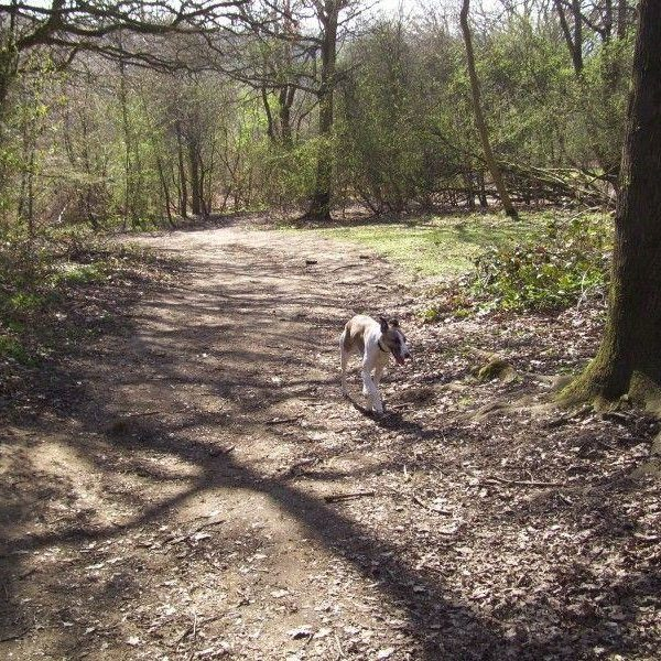 Dog walk at Shotover Country Park