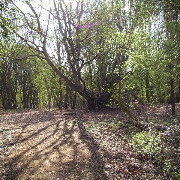 Shotover Country Park photo 2