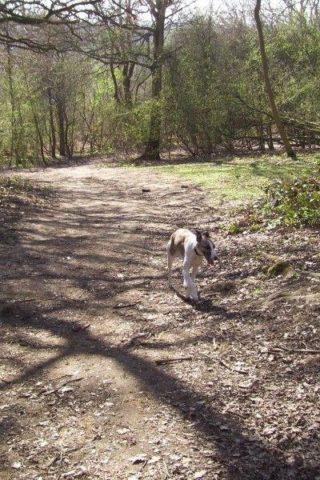 Dog walk at Shotover Country Park photo