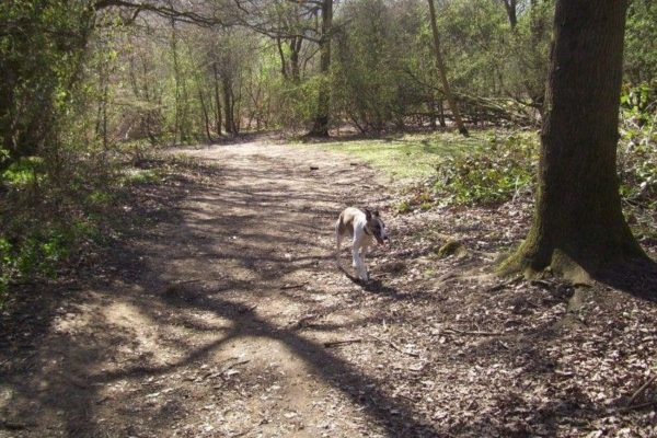 Shotover Country Parkphoto