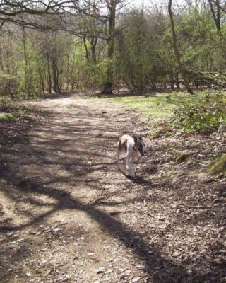 Dog walk at Shotover Country Park