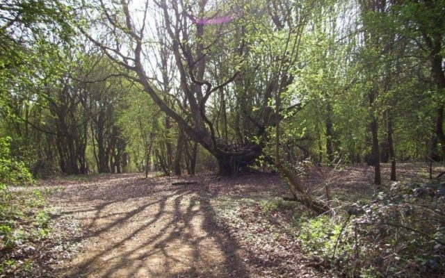 Shotover Country Park Dog walk in Oxfordshire