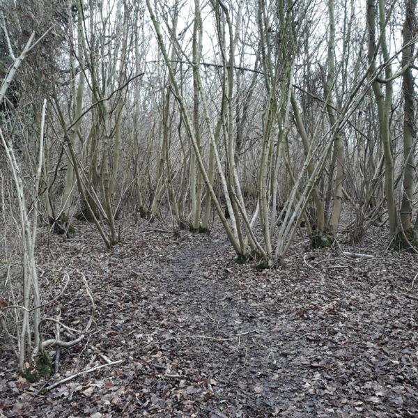 Dog walk at Singledge Lane Woods