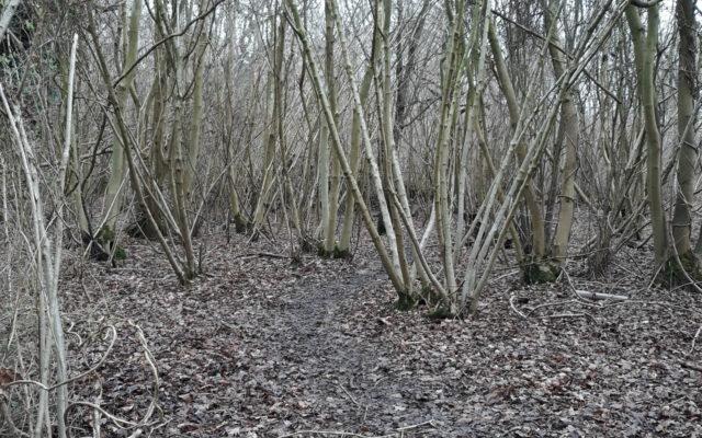 Singledge Lane Woods Dog walk in Kent