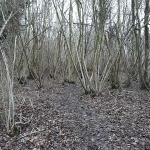 Singledge Lane Woods