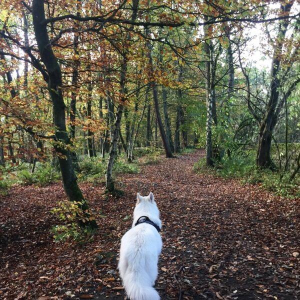 Dog walk at Skipton Castle Woods