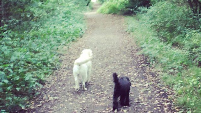 Dog walk at Slaughterford