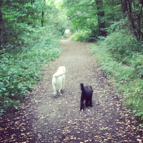 Dog walk at Slaughterford