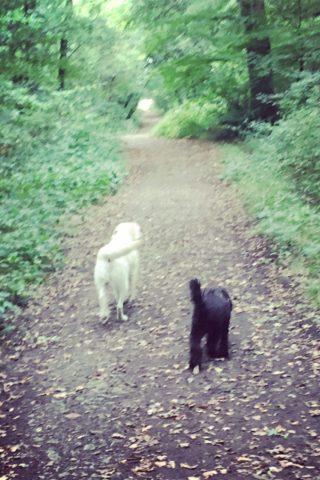 Dog walk at Slaughterford photo