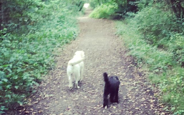 Slaughterford Dog walk in Wiltshire