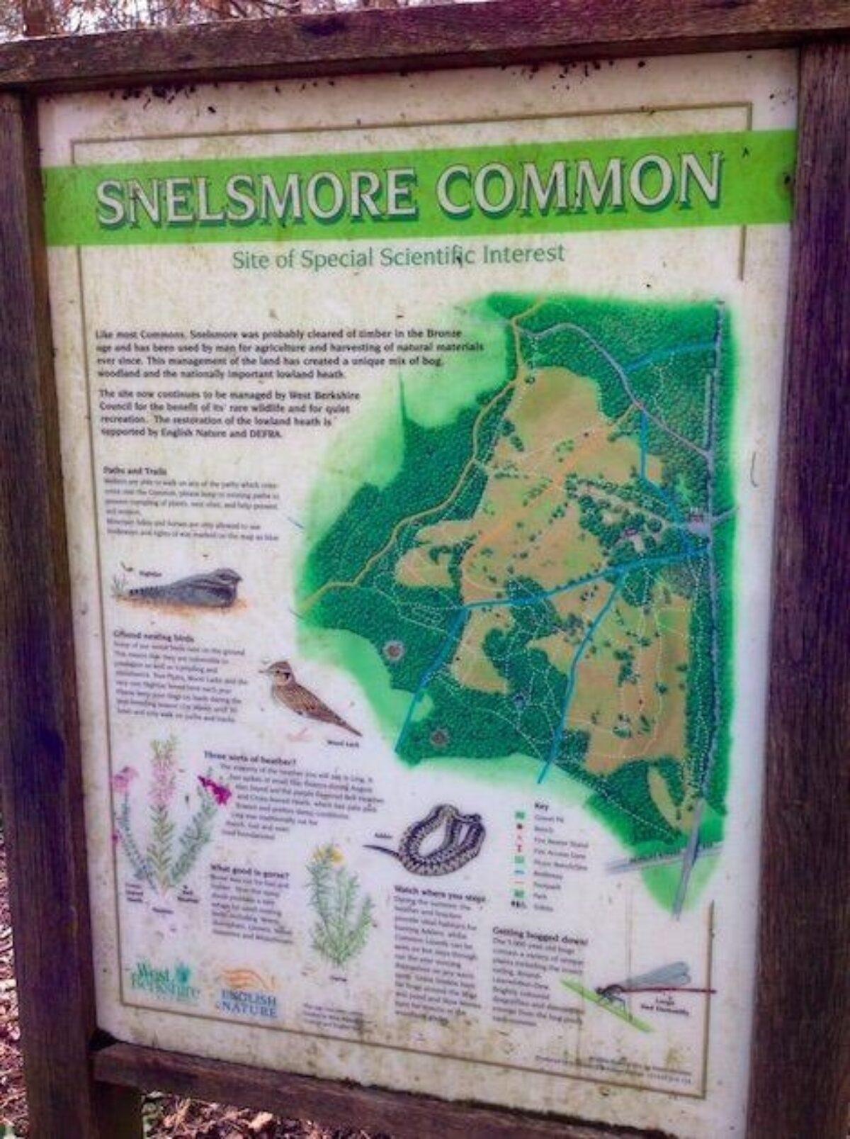 Snelsmore Common large photo 3