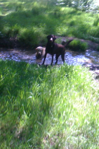 Dog walk at South Ascot photo