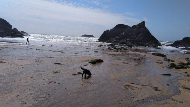 Dog walk at South West Salcombe