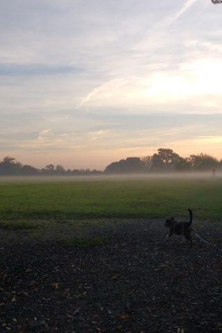 Dog walk at Southwick Country Park photo