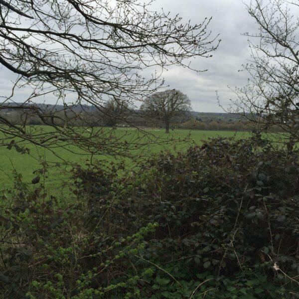 Dog walk at St Anne's Hill