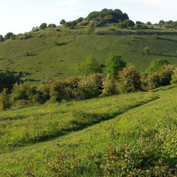 Dog walk at St Catherines Hill Fort