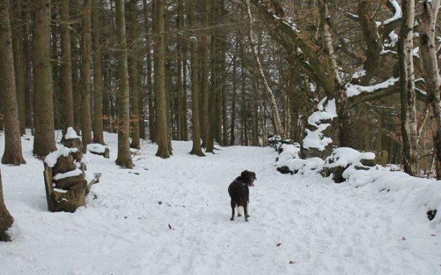 St Ives Estate Dog walk in Yorkshire (West)