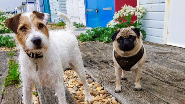 Dog walk at St Leonards-on-Sea Beach Huts