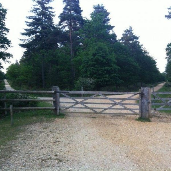 Dog walk at Standing Hat, New Forest