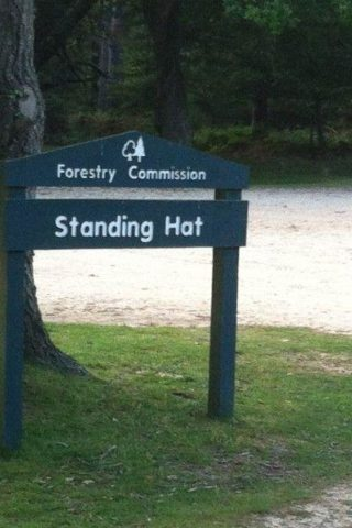 Dog walk at Standing Hat, New Forest photo