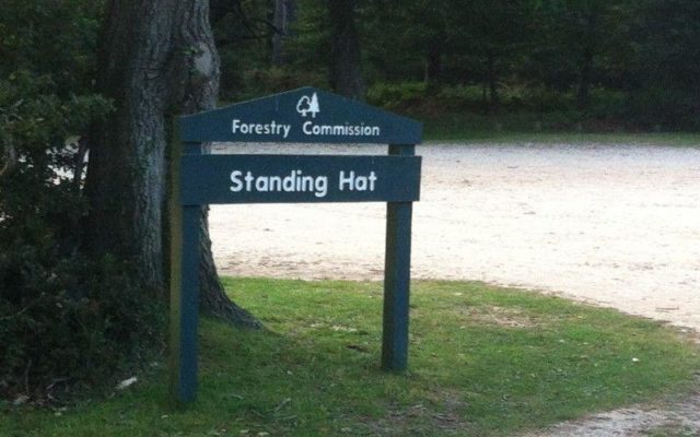 Standing Hat, New Forest Dog walk in Hampshire