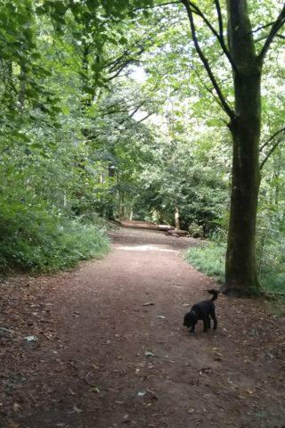 Dog walk at Stanmer Park, Brighton photo