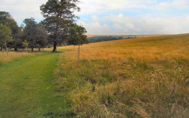 Stanmer Park Dog walk in Sussex (East)