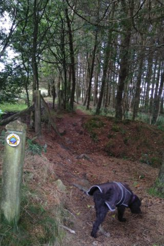 Dog walk at Stiper Stones Circle photo