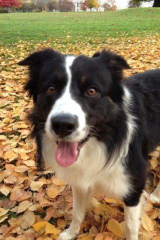 Dog walk at Stirling University photo