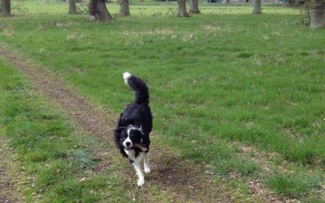 Stirling University Dog walk in Stirlingshire