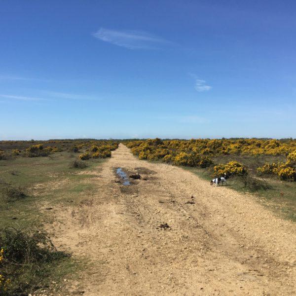 Dog walk at Stockley