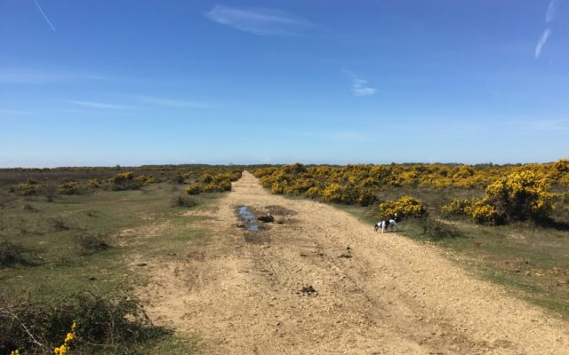 Stockley Dog walk in Hampshire