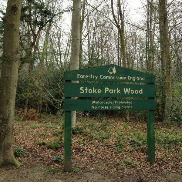 Dog walk at Stoke Park Wood