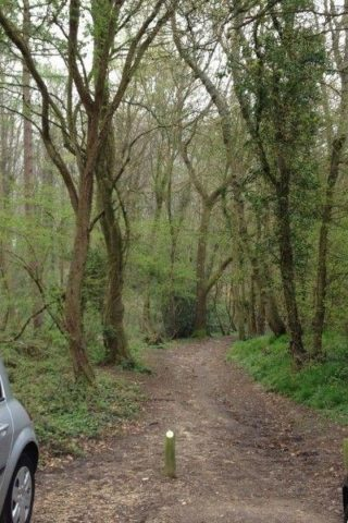 Dog walk at Stoke Park Wood photo